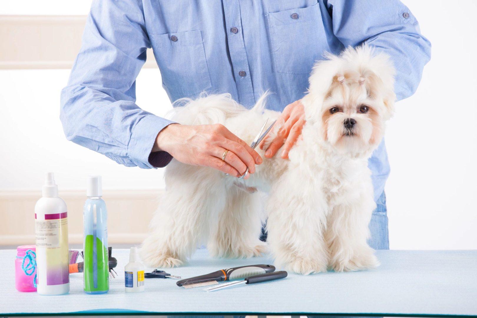 dog grooming orange county