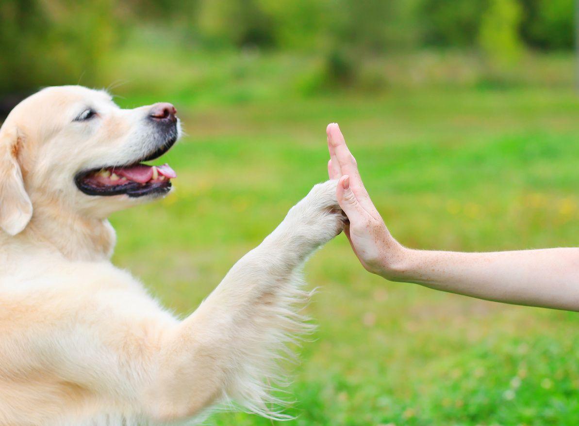 puppy obedience training in orange CA